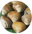 春の旬 ほっき貝